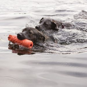 dogs swimming in water, one with Kong Training Dummy bright orange in mouth
