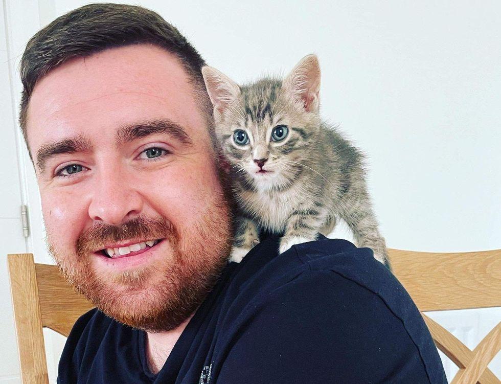 shoulder kitten, real men love cats