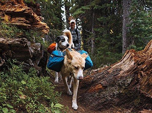 dogs on trail wearing Ruffwear Approach Dog hiking gear packs on their backs