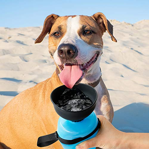 dog on beach hike about to lick from a travel water bottle