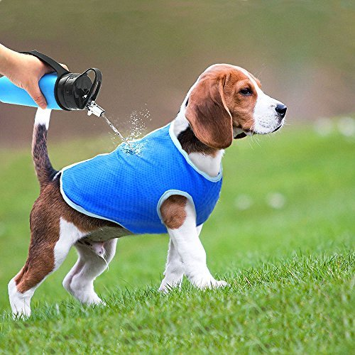 Beagle on grass wearing blue Selmai Dog Evaporative Swamp Cooler Vest with hand pouring water on it from bottle