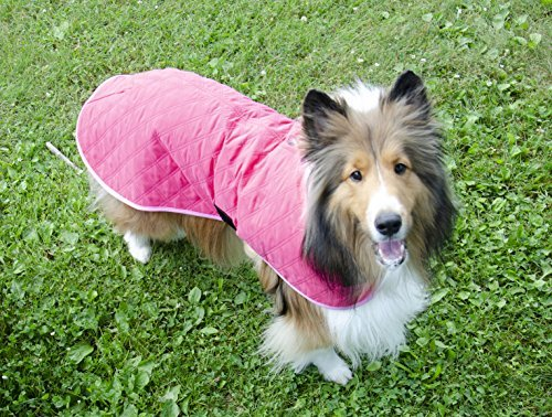 Collie wearing pink Derby Originals jacket