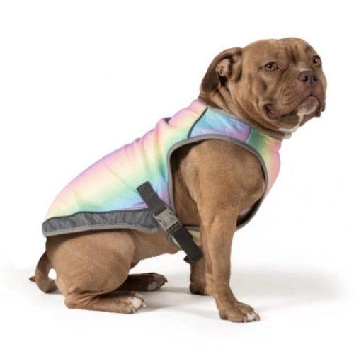 dog in rainbow Canada Pooch vest