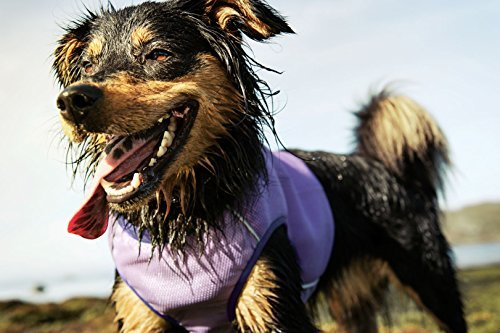 wet dog wearing Hurtta Collection Cooling Vest
