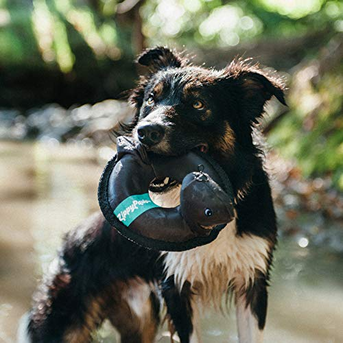 dog in creek with ZippyPaws Floaterz Floating Squeaker Dog Toy shark version in its mouth