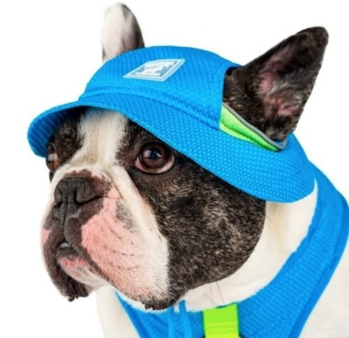 Dog in Canada Pooch cooling hat and vest