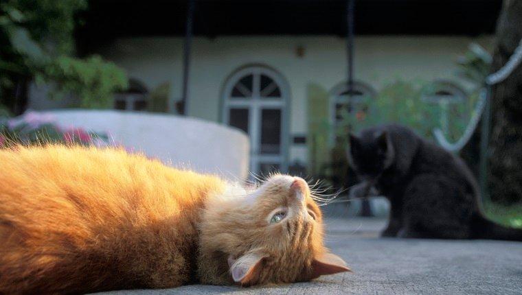 Cats Outside Ernest Hemingway House