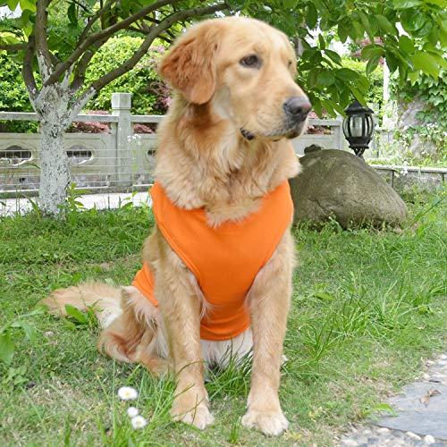 orange Amazon Lovelonglong ribbed tank summer dog top on Golden Retriever