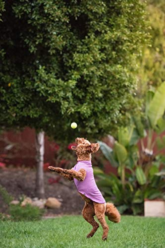 dog jumping to catch ball in pink Amazon Gold Paw sun shield summer dog top