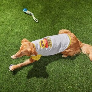 dog lying down wearing Frisco Sun's Out Tongue's Out Dog T-Shirt with sun wearing sunglasses behind desert scene graphic