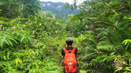 Surveys were carried out on foot within the thick Malaysian forest © MNS Kuching Branch