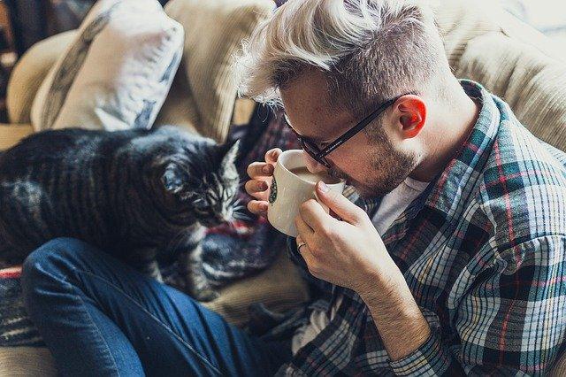 cats drink tea
