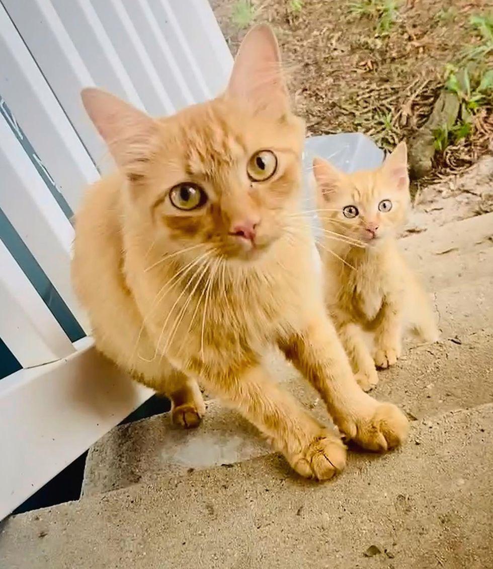 stray cat and kitten