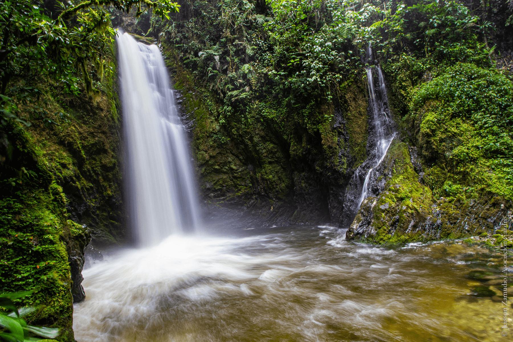 The Paraguas-Munchique forest is home to 741 bird species © Jeisson Zamudio / Asociación Calidris