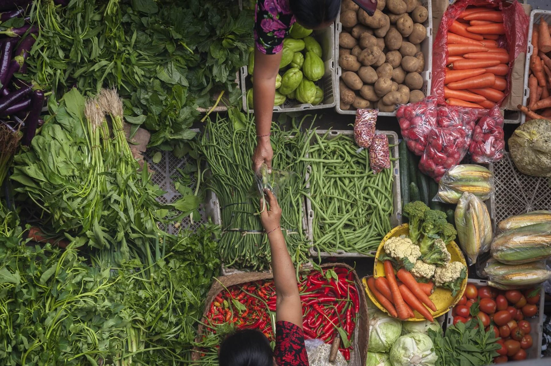 Food production must become sustainable to safeguard the future of humanity © Shutterstock