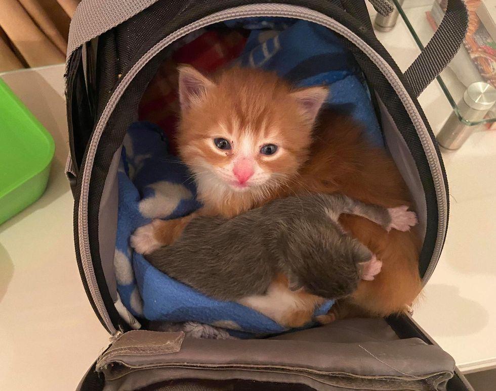 kitten and smaller kitten
