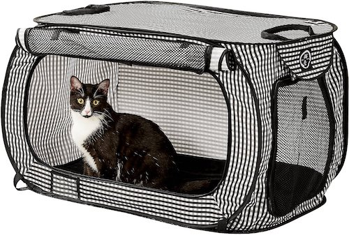 Cat in black and white mesh playpen