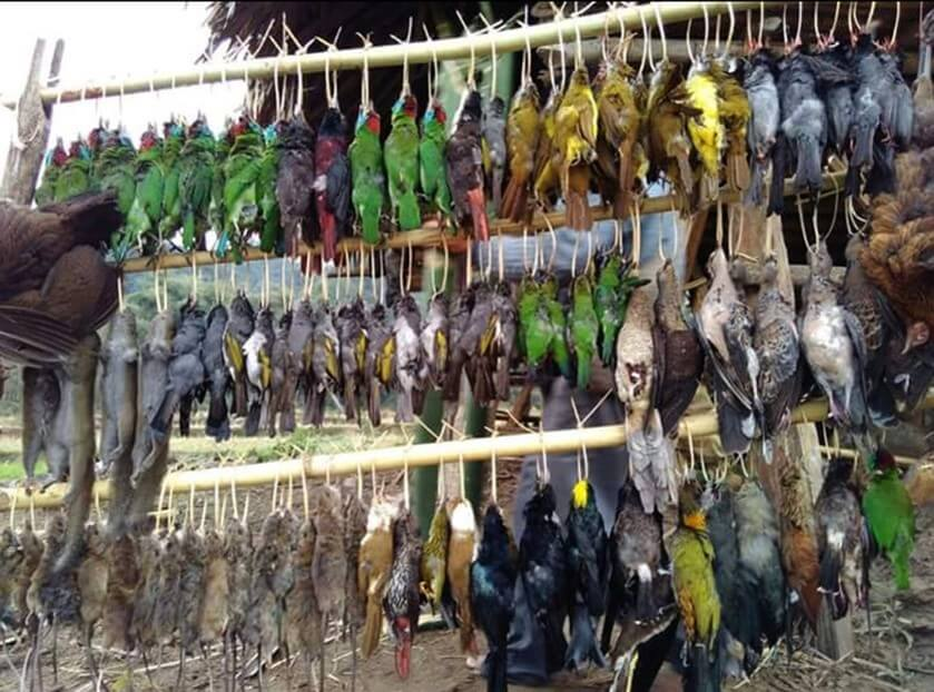 In northeast India, the sale of wild birds for food is rampant © Abrar Ahmed