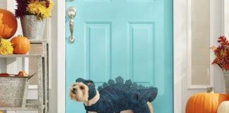 the-15-best-halloween-costumes-for-dogs-in-2021-from-chewy